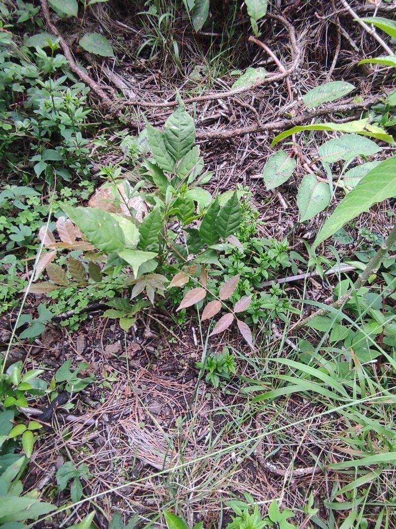 Spot the wisteria!
