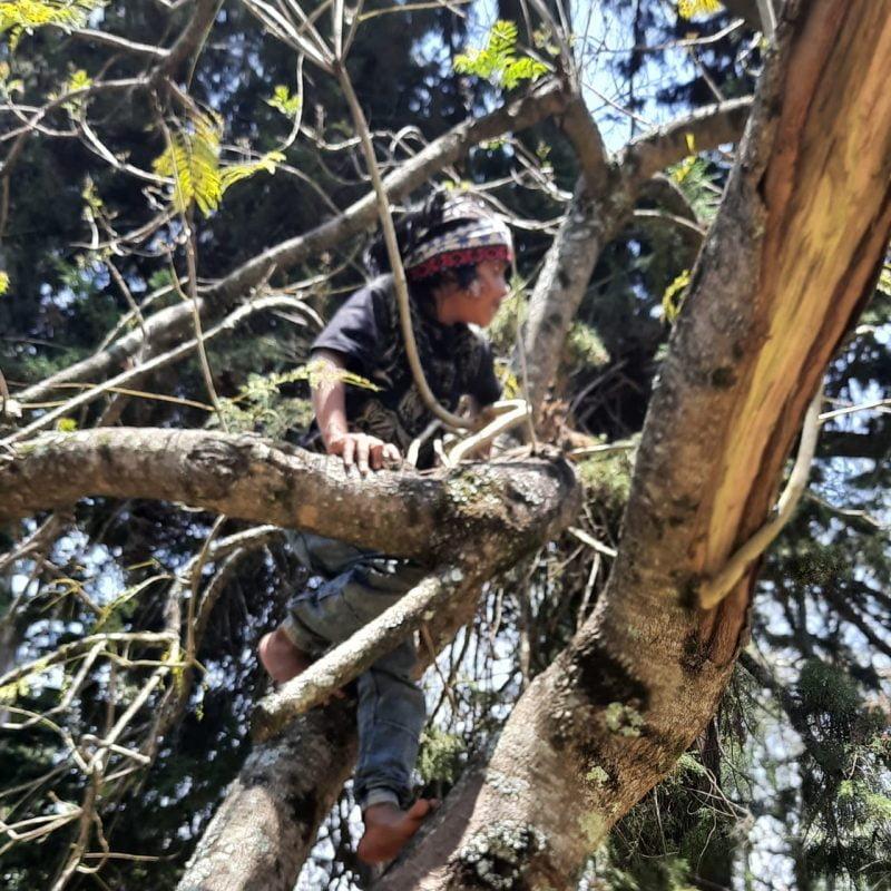 kid up a tree