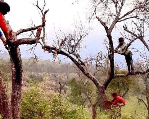 kids up a tree