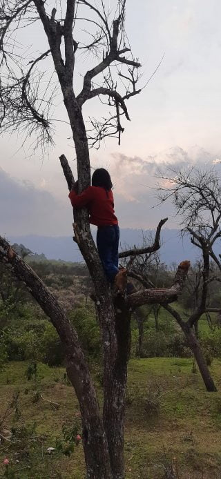 one kid up a tree