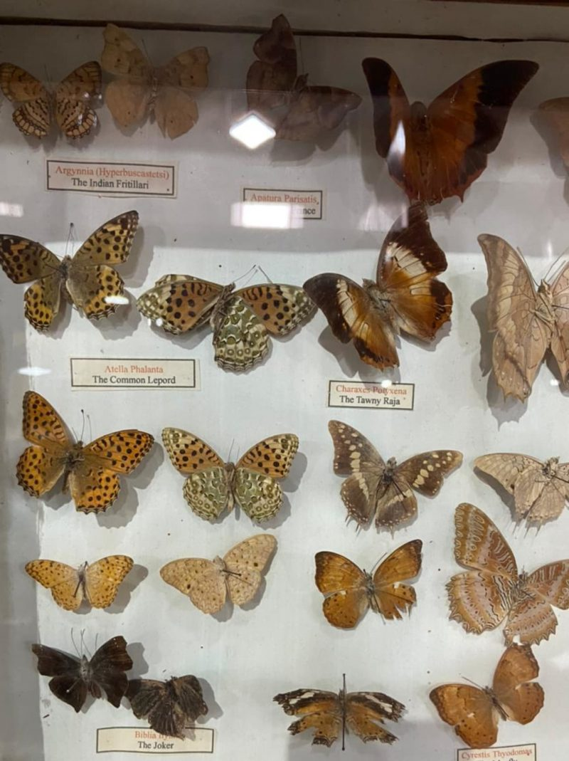 The butterfly exhibit at the Shenbaganur museum