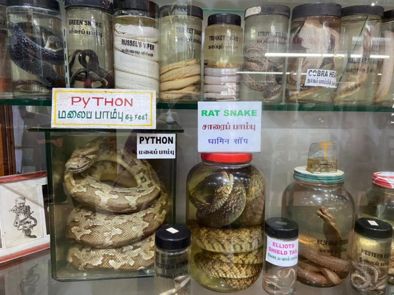 Father Anglade's stuffed and seasoned snakes
