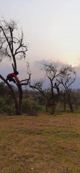 three kids up a tree