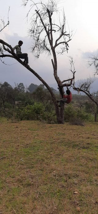 two kids up a tree